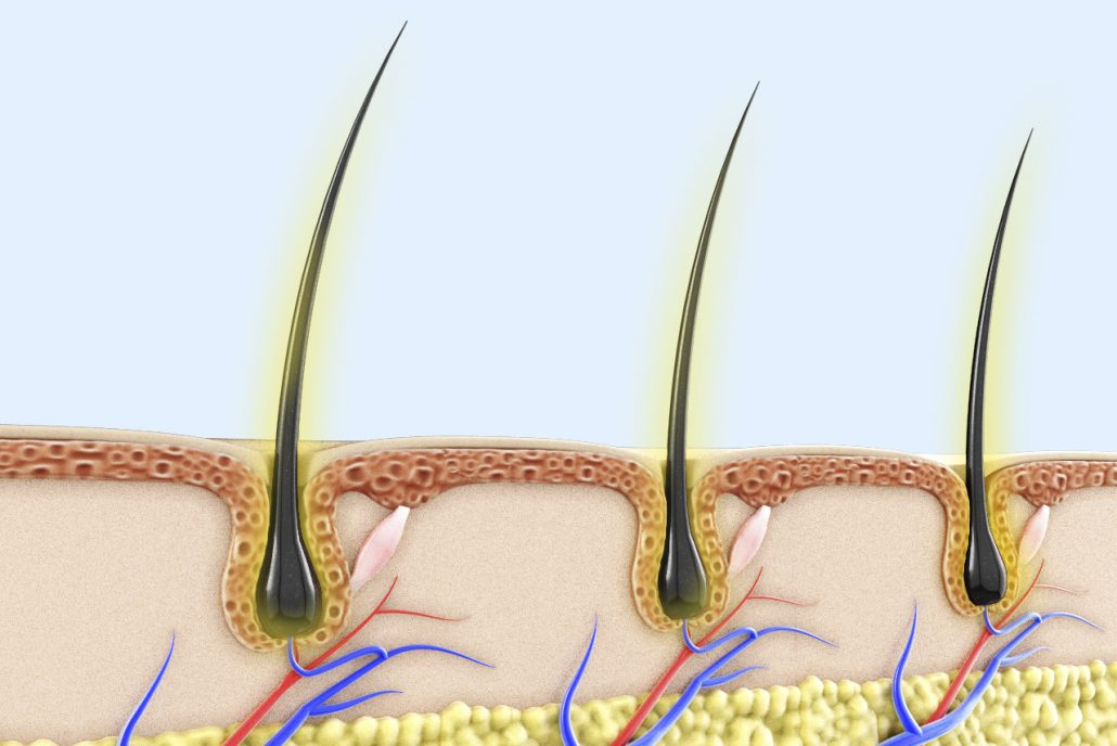 Hair Folicle Explained
